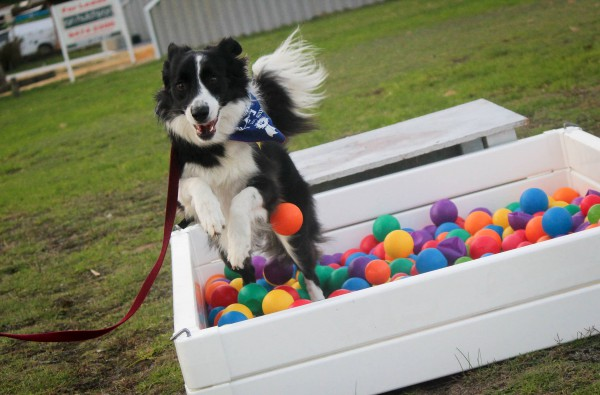 Canine Adventure Course